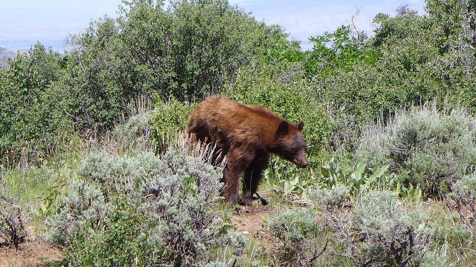 Bear, Colorado, Gunnison, Park, Nature, Outdoors