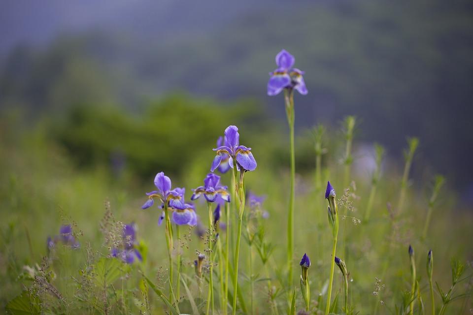 Nature, Flowers, Outdoors, Hayfields, Grass, Wildflower