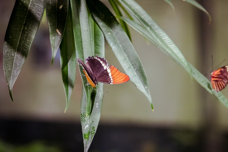 Insect, Invertebrate, Leaf, Outdoors, Nature, Flower