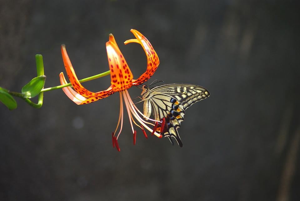 Nature, Outdoors, Insects, Butterfly, Plants