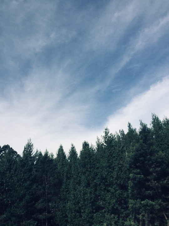 Sky, Trees, Landscape, Forest, Nature, Clouds, Outdoors