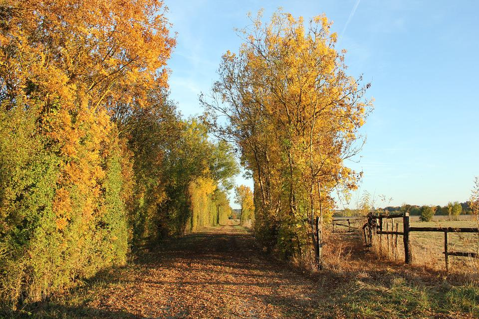 Autumn, France, Countryside, Outdoors, Landscape, Rural