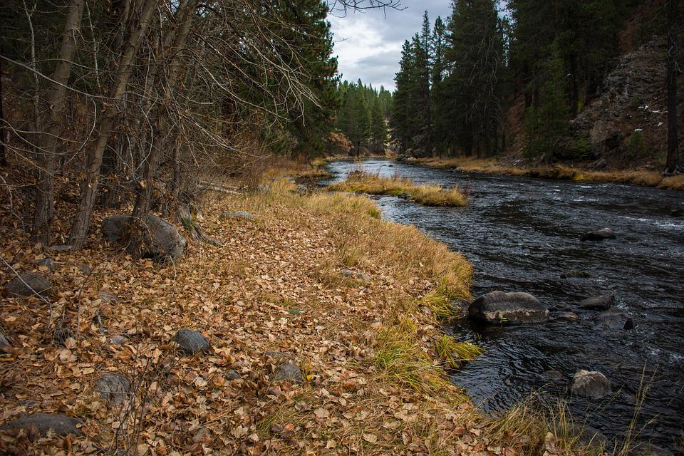 Nature, Wood, Water, Outdoors, Tree, River, Landscape