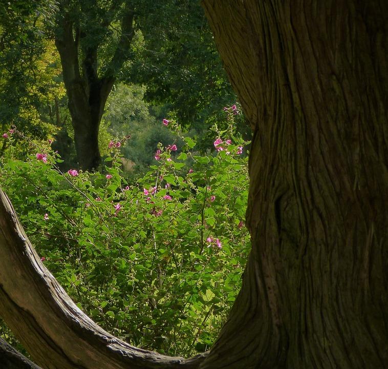 Tree, Wood, Nature, Landscape, Outdoors