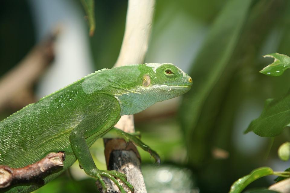 Wildlife, Leaf, Animal, Nature, Outdoors, Tree