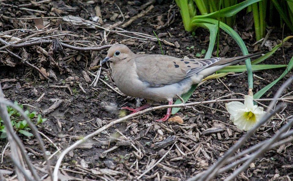 Nature, Outdoors, Bird, Little, Wildlife