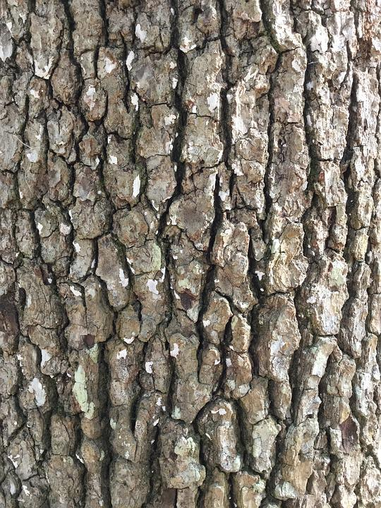Tree Bark, Rough, Background, Bark, Nature, Outdoors