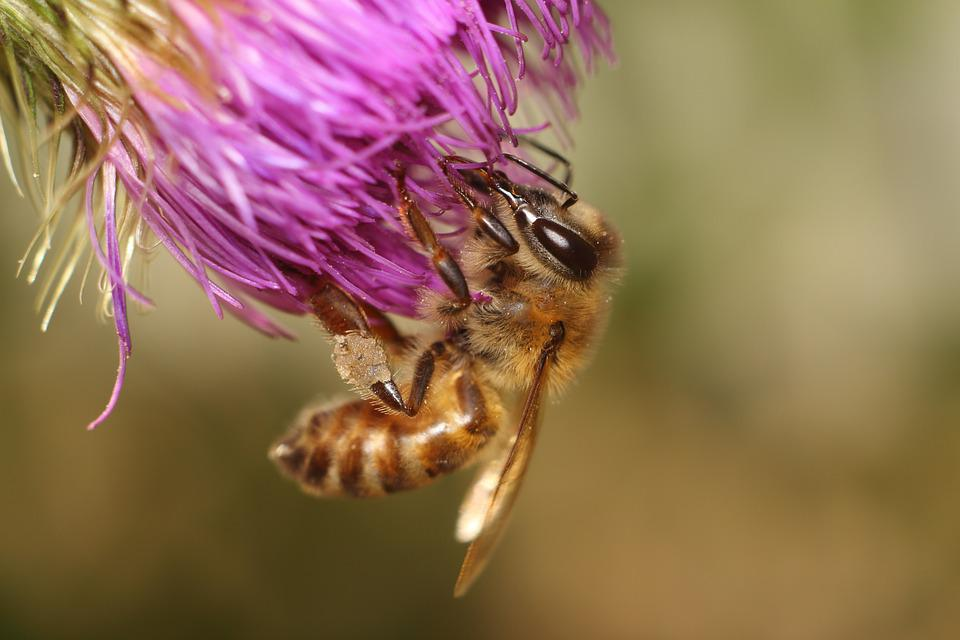 Nature, No One, Flower, Outdoors, Insect, Bee
