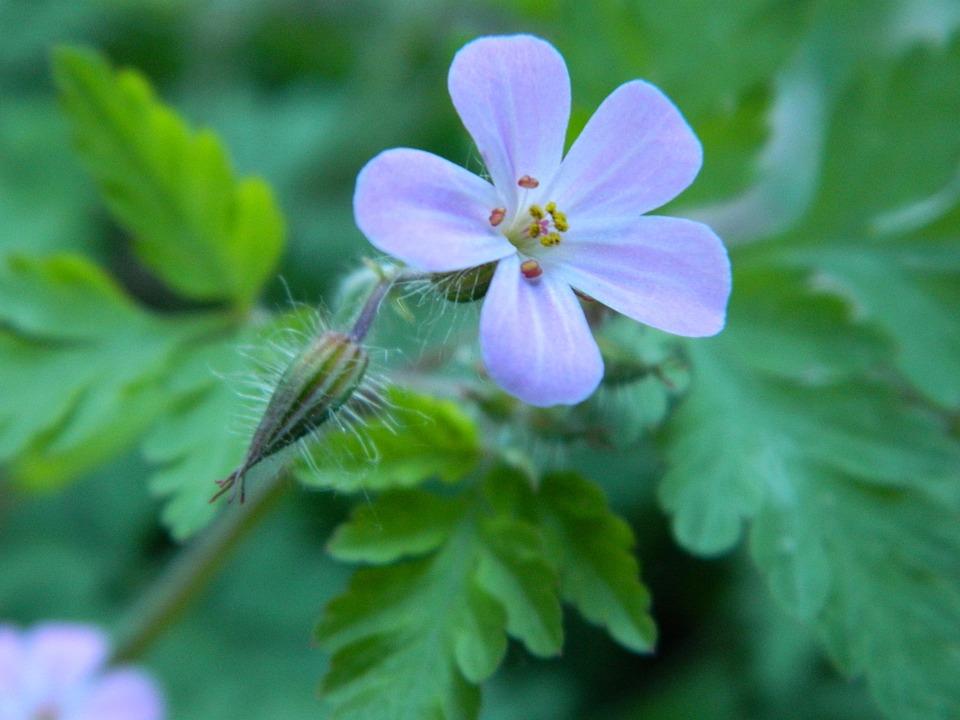 Nature, Flora, Flower, Garden, Leaf, Outdoors