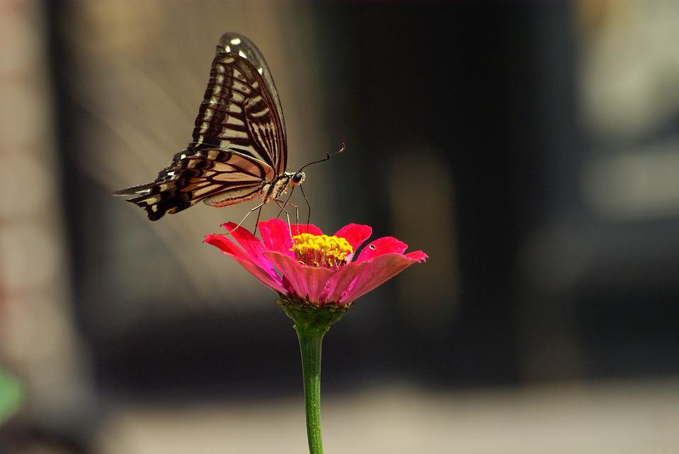 Nature, Insects, Outdoors, Flowers, Summer, Butterfly