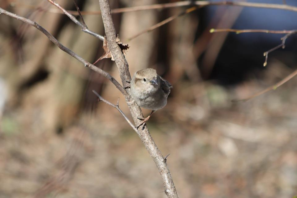 Nature, Living Nature, Animals, Outdoors, Tree, Little