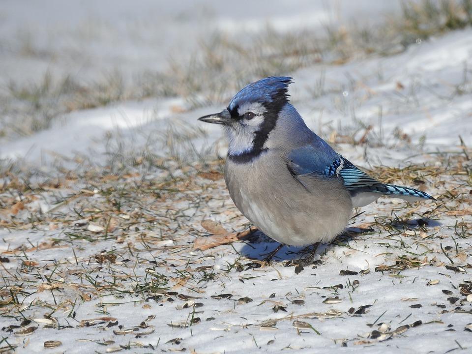 Nature, Wildlife, Bird, Animal, Outdoors, Feather, Wing