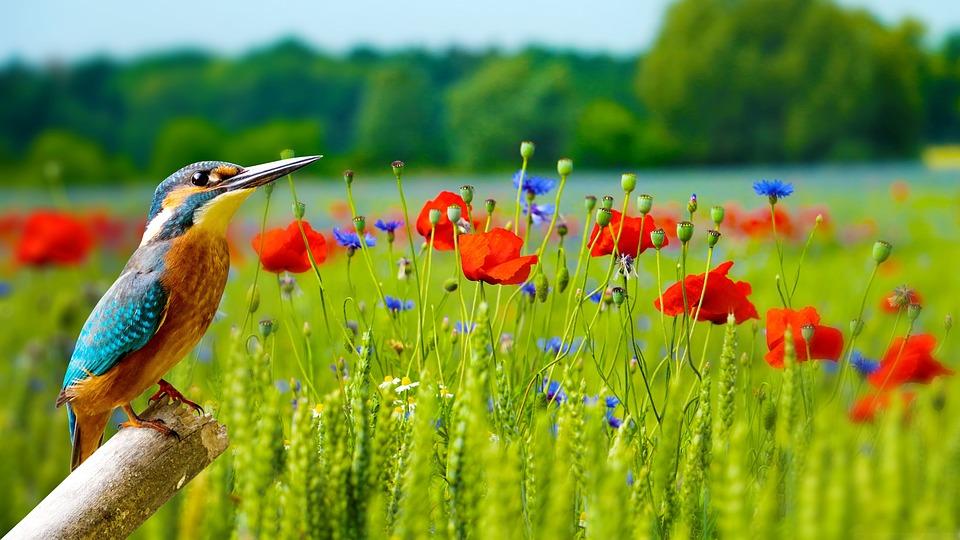 Wallpaper Nature Outdoors Grass Wildlife Flower
