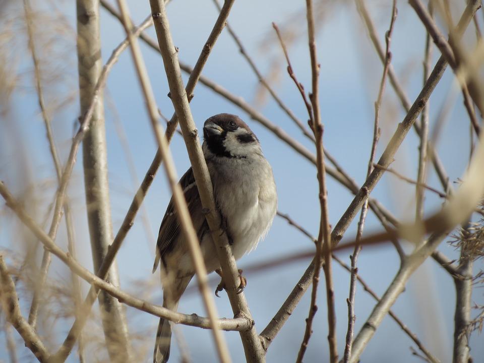 Bird, Nature, Living Nature, Outdoors, Winter, Little