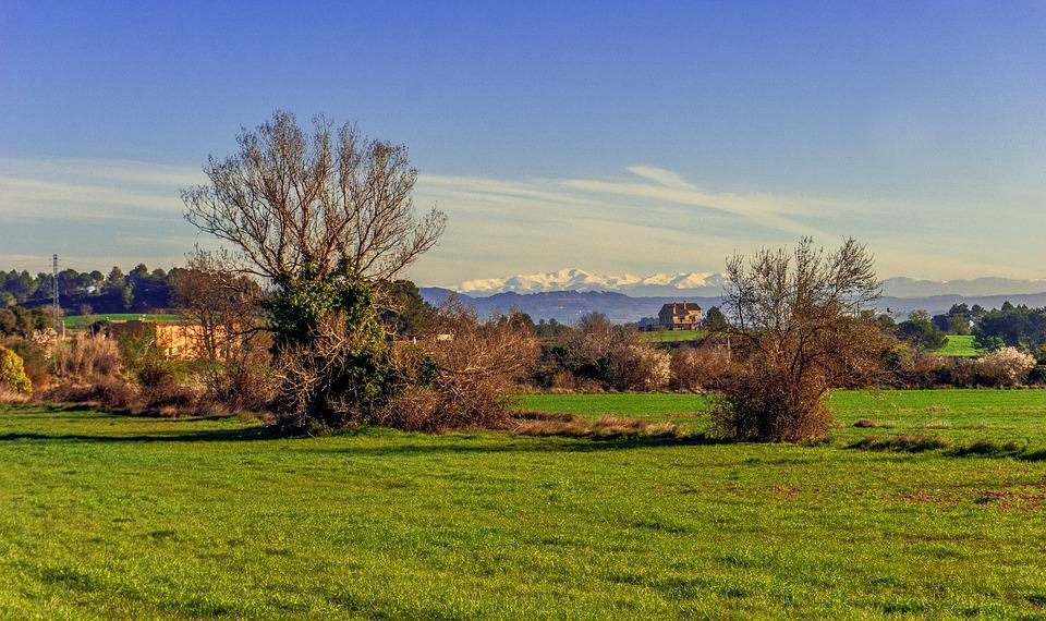 Nature, Lawn, Tree, Landscape, Panoramic, Outdoors, Sky