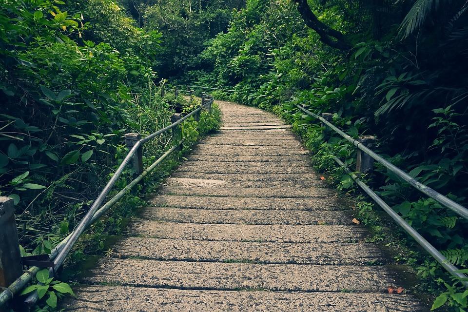 Nature, Park, Landscape, Outdoors, Green, Trees, Bridge