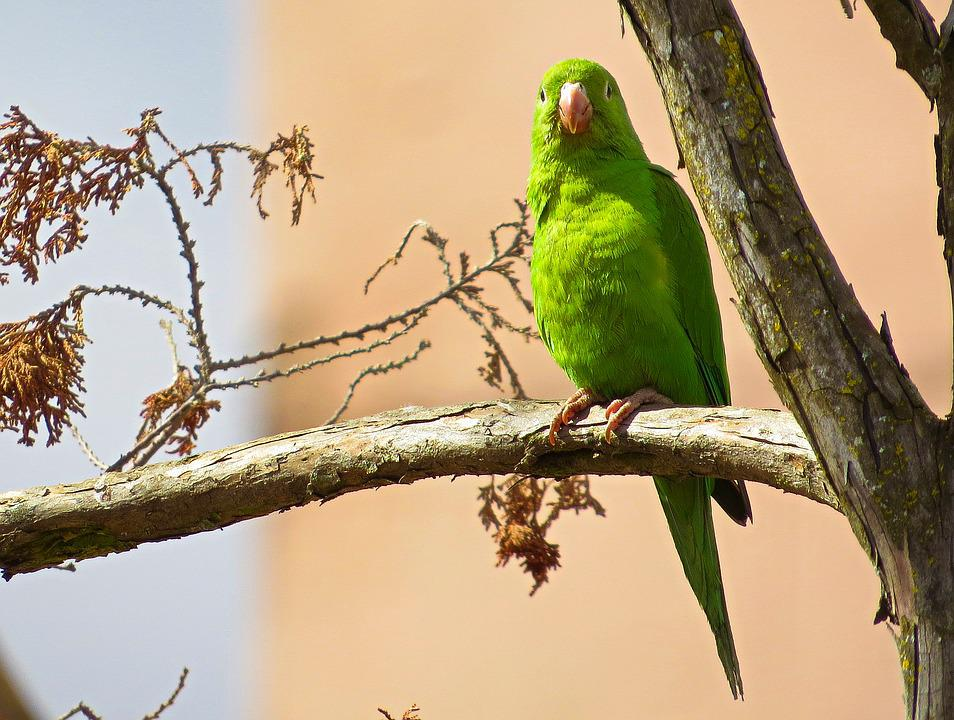Parrot, Bird, Tree, Green Feathers, Outdoors