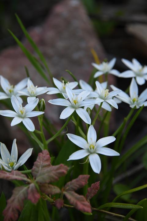Flower, White, Petal, Spring, Outdoors, Garden