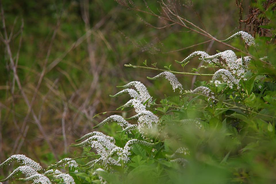 Nature, Outdoors, Season, Plants, Wood, Flowers
