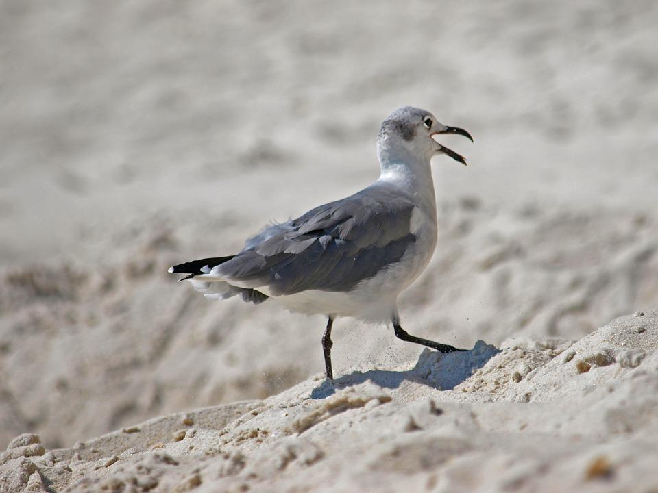 Bird, Wildlife, Nature, Outdoors, Animal, Sand, Water