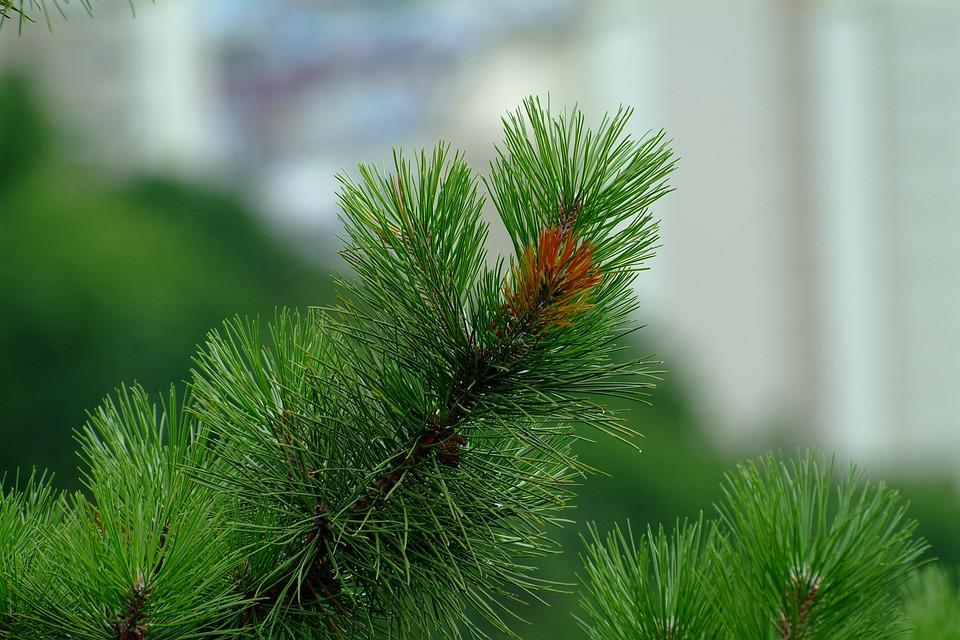 Nature, Some People Don't, Outdoors, Sewing Needles