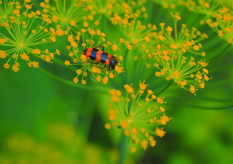 Nature, Flower, Plant, Sheet, Outdoors