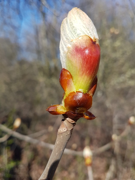 Flower, Nature, Plant, Outdoors, Bud, Spring