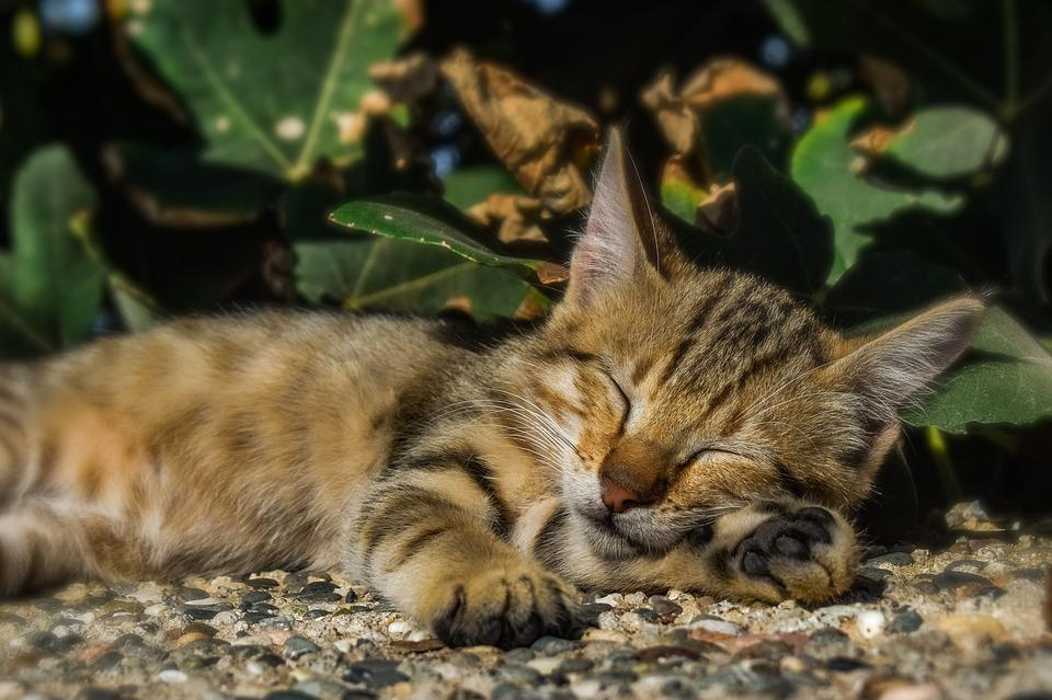 Cat, Stray, Outdoors, Animal, Nature, Cute, Portrait