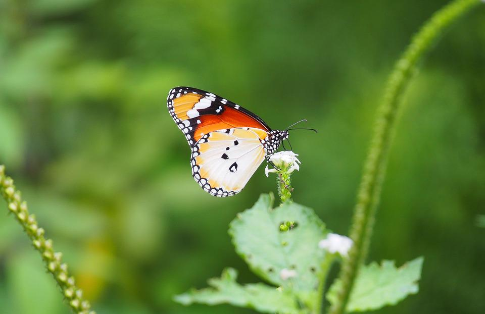 Nature, Insect, Outdoors, Butterfly, Summer, Flora