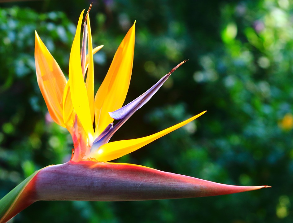 Strelitzia, Nature, Summer, Outdoors, Flora, Leaf