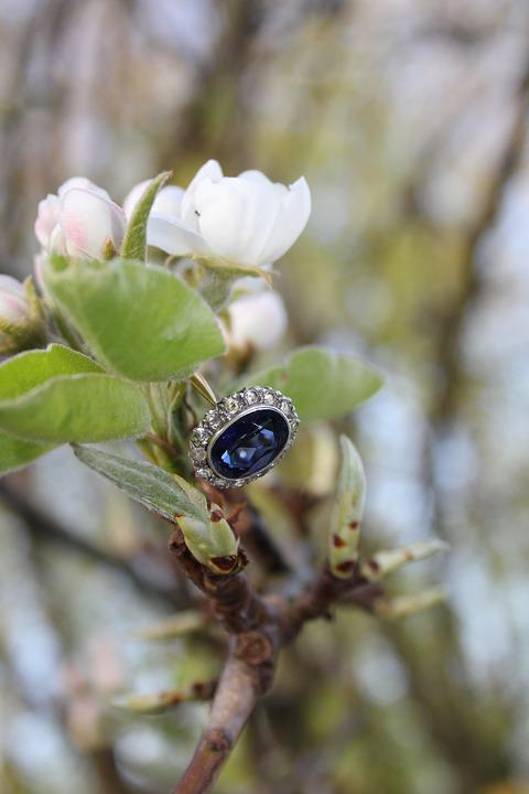 Nature, Flora, Tree, Leaf, Outdoors, Ring