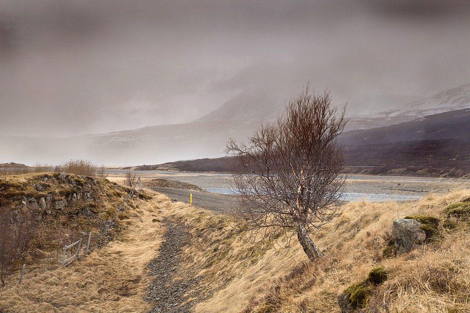 Tree, Fog, Mist, Fantasy Landscape, Outdoors, Autumn
