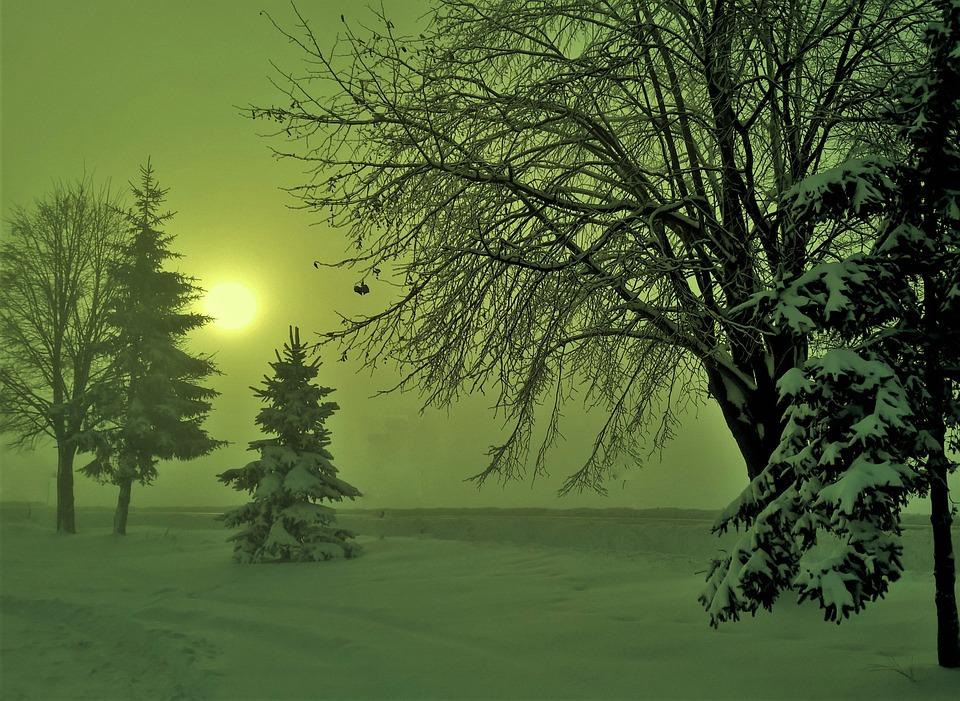 Tree, Landscape, Nature, Wood, Outdoors