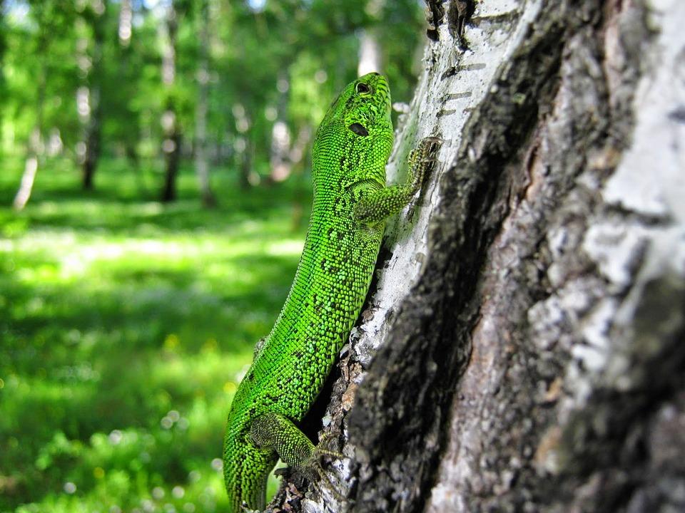 Nature, Wood, Tree, Outdoors