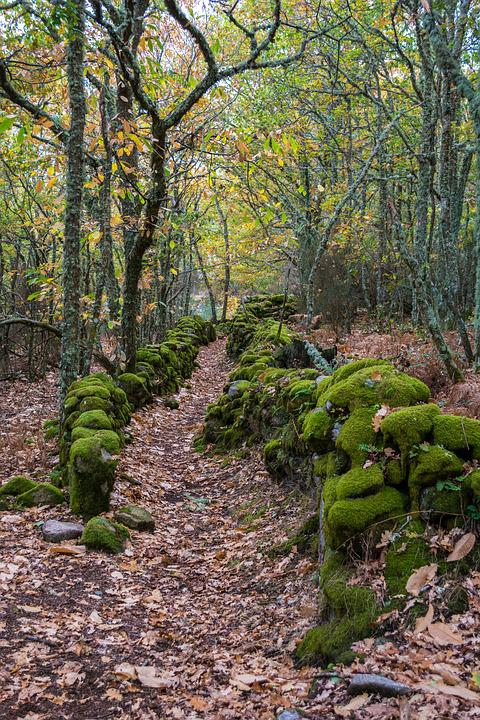 Nature, Wood, Plant, Tree, Landscape, Leaf, Outdoors