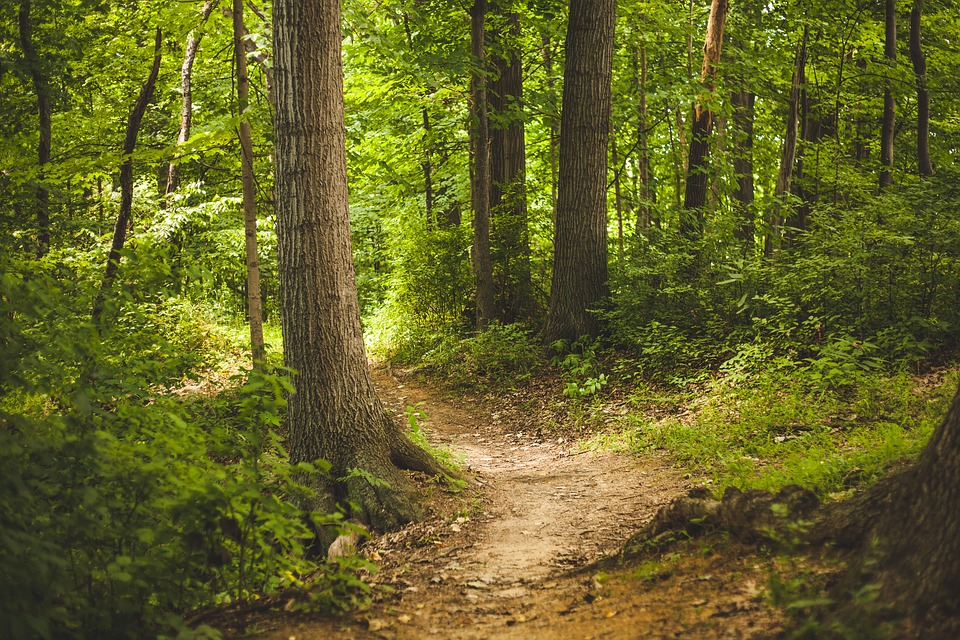 Forest, Nature, Outdoors, Path, Trees, Woods