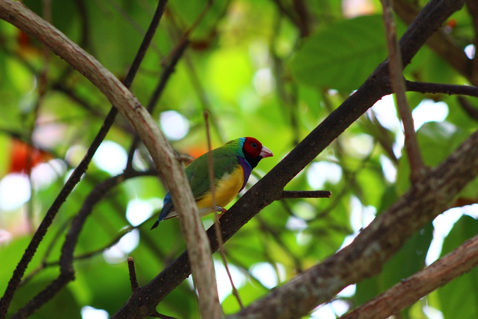 Bird, Wildlife, Nature, Tree, Outdoors, Leaf, Tropical