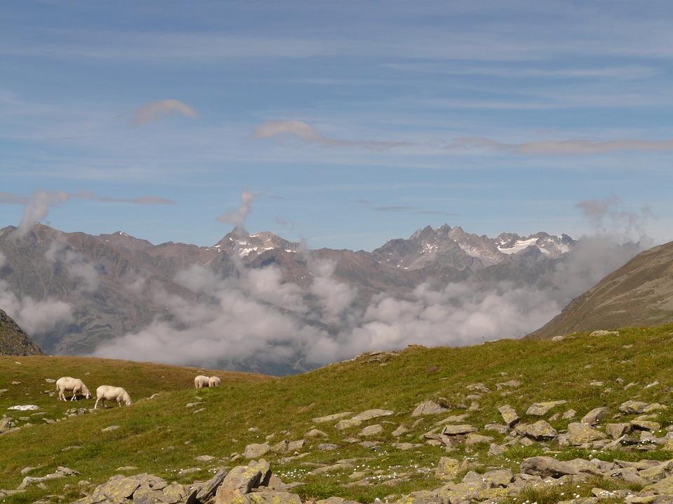 Mountain, Mountains, Timmelsjoch, Outlook, Sheep, Alm