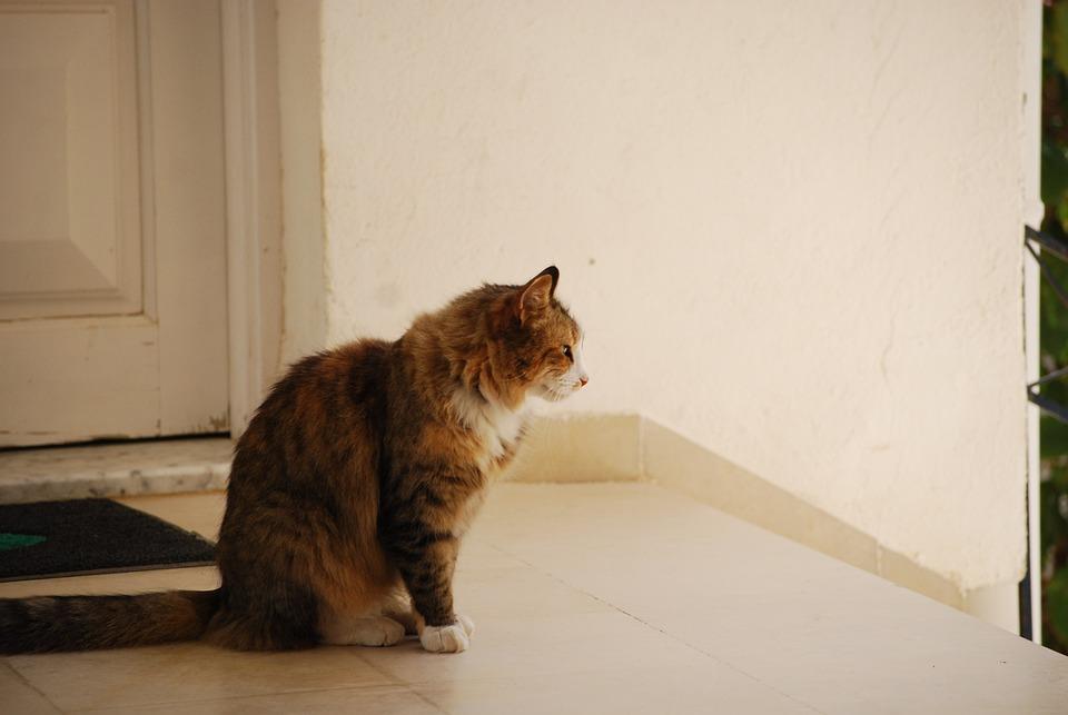 Cat, Tabby, Outside