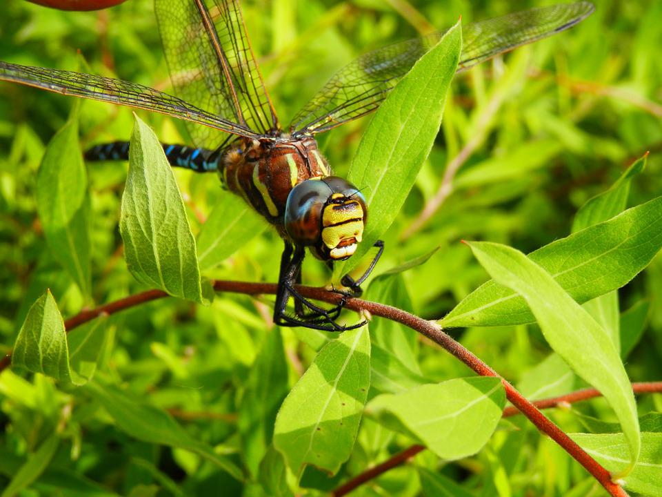 Dragonfly, Outside, Nature, Insect