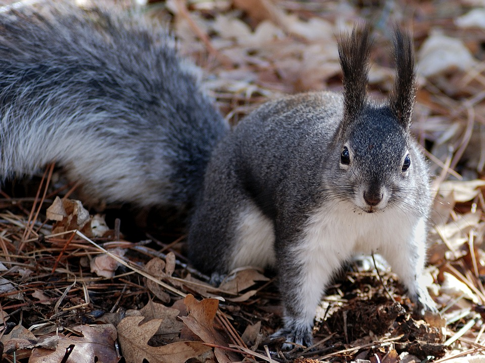 Squirrel, Rodent, Animal, Furry, Nature, Outside