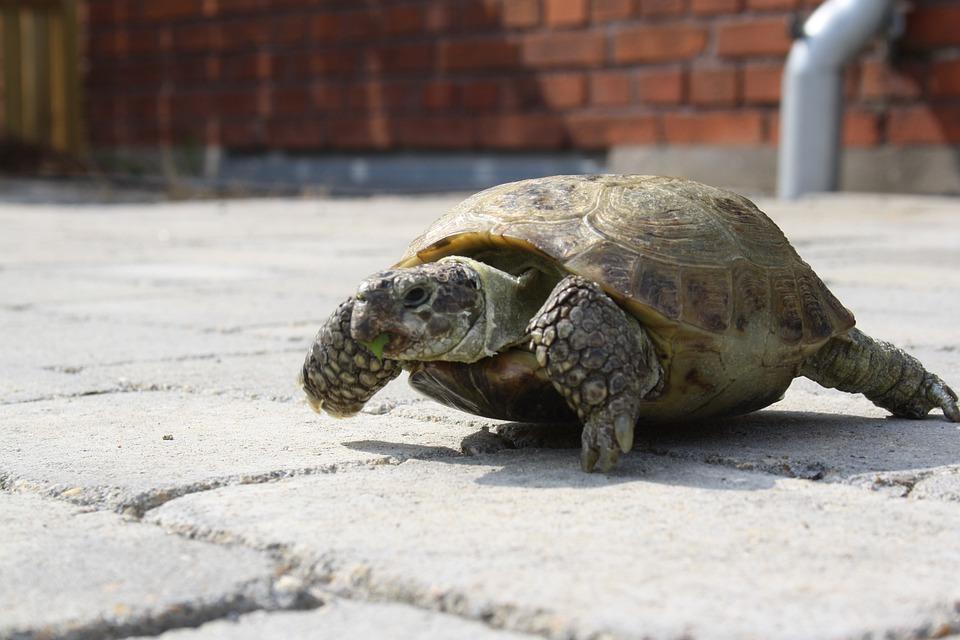 Turtle, Green, Outside, Terrace