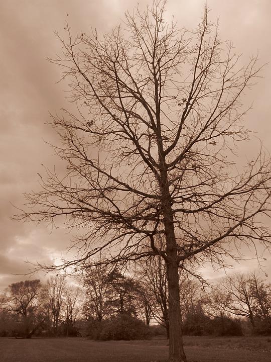 Tree, Nature, Park, Outdoor, Overcast, Cloud, Landscape
