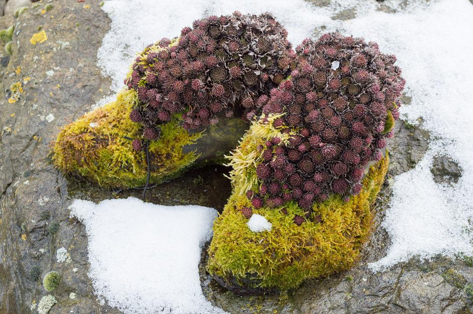 Moss, Shoes, Overgrown