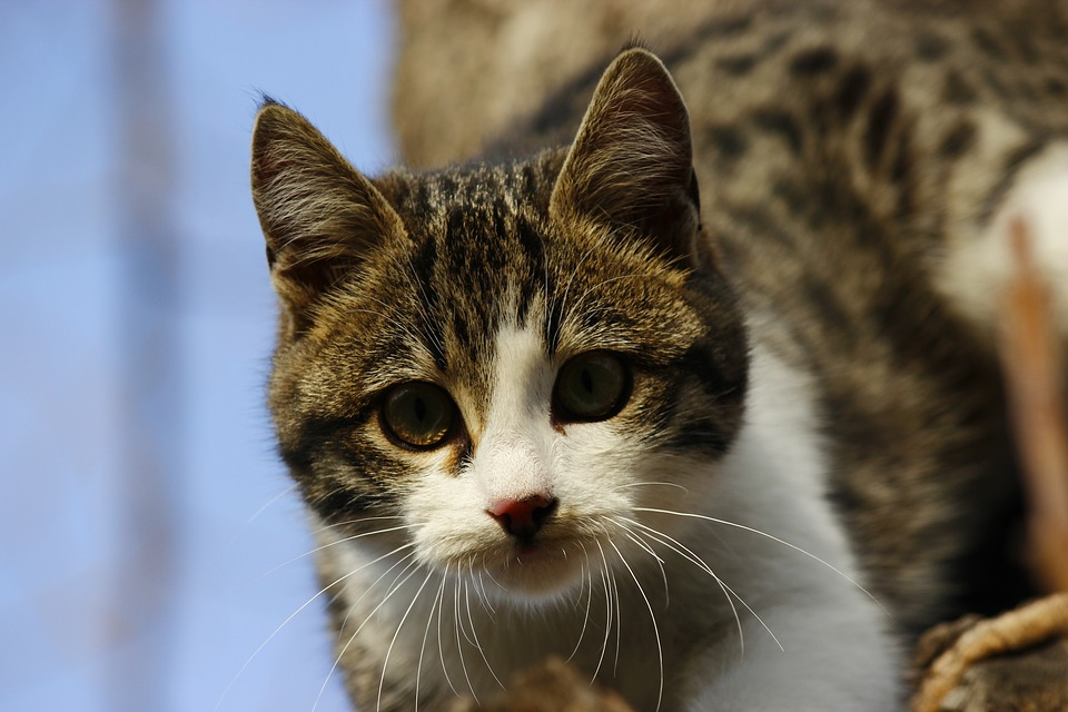 Cat, Animal, Overview