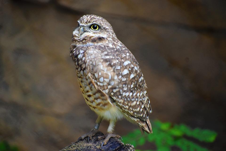 Owl, Beautiful Bird, Animal, Bird Of Prey, Raptor 2021