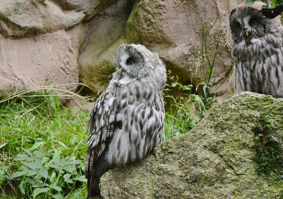 Animal World, Nature, Bird Of Prey, Owl