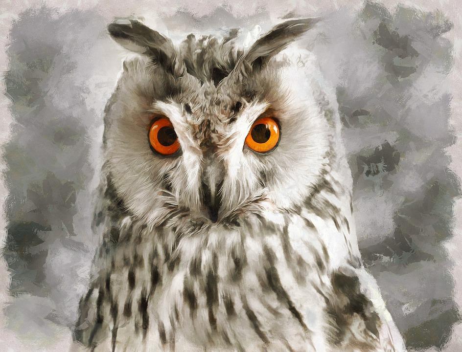 Owl, Eyes, Grey, Nature, Bird