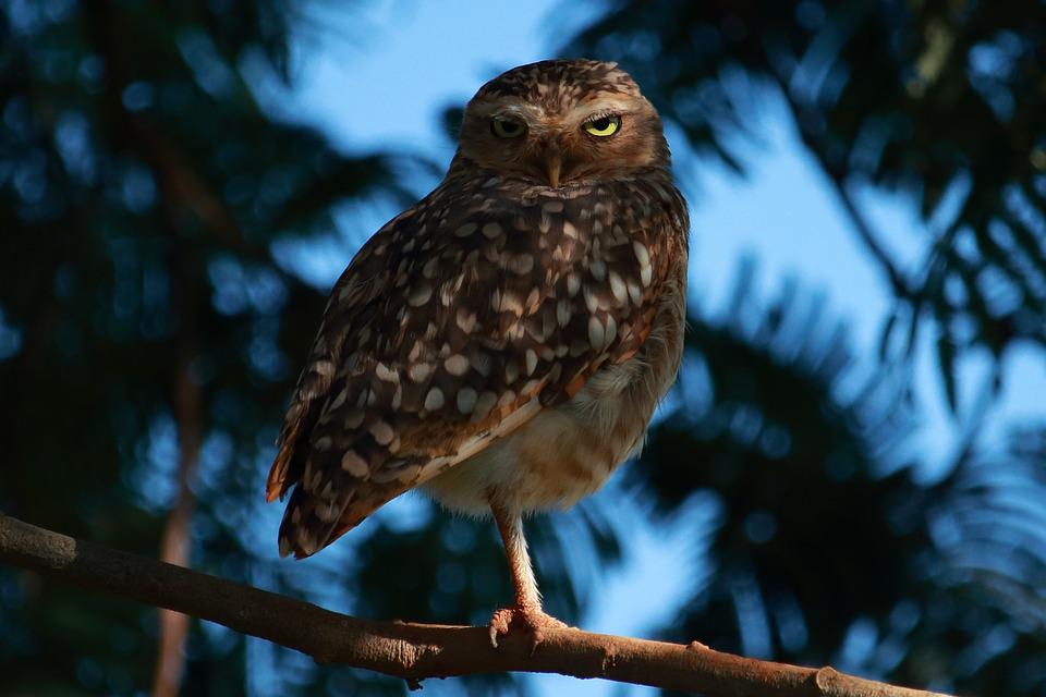 Wildlife, Nature, Tree, Birds, Outdoors, Owl, Look