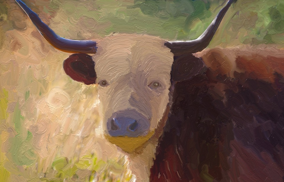 Animal World, Agriculture, Beef, Bull, Horns, Ox